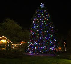 Tree Lighting shines