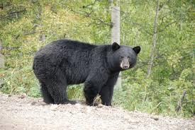 Deadly bear attack